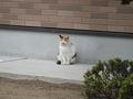 Local Cat, #0003