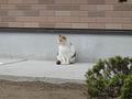 Local Cat, #0004