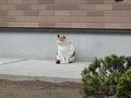 Local Cat, #0005