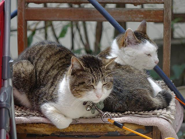 Yuki & Hoshi, #1387