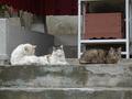 白峯寺の猫, #1860
