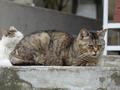 白峯寺の猫, #1862