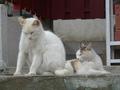 白峯寺の猫, #1865