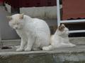 白峯寺の猫, #1869