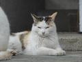 白峯寺の猫, #1870