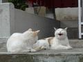 白峯寺の猫, #1871