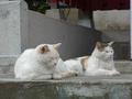 白峯寺の猫, #1872