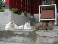 白峯寺の猫, #1874