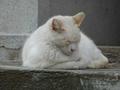 白峯寺の猫, #1875