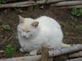 白峯寺の猫, #1885