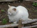白峯寺の猫, #1886