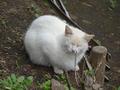 白峯寺の猫, #1887