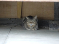 白峯寺の猫, #1925