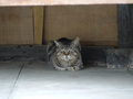 白峯寺の猫, #1926