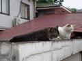 白峯寺の猫, #1930