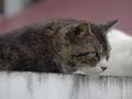 白峯寺の猫, #1934