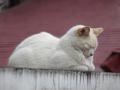 白峯寺の猫, #1935