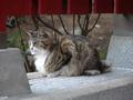 白峯寺の猫, #1940