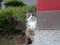 白峯寺の猫, #1944