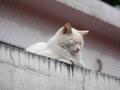 白峯寺の猫, #1946