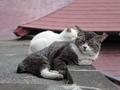 白峯寺の猫, #1947