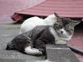 白峯寺の猫, #1948
