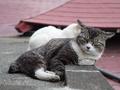 白峯寺の猫, #1949
