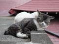 白峯寺の猫, #1950