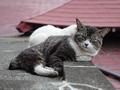 白峯寺の猫, #1951
