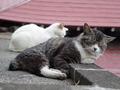 白峯寺の猫, #1952