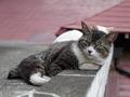 白峯寺の猫, #1954