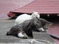 白峯寺の猫, #1955