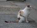 白峯寺の猫, #1964