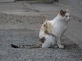 白峯寺の猫, #1965