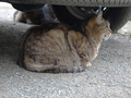白峯寺の猫, #1968