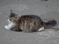 白峯寺の猫, #1977
