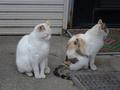白峯寺の猫, #1979
