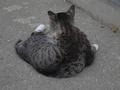 白峯寺の猫, #1981