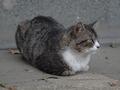 白峯寺の猫, #1983
