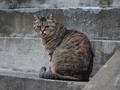 白峯寺の猫, #1984