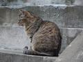 白峯寺の猫, #1985