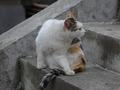 白峯寺の猫, #1986