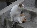 白峯寺の猫, #1987