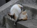 白峯寺の猫, #1988