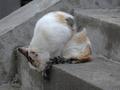 白峯寺の猫, #1989