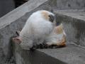 白峯寺の猫, #1990