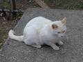 白峯寺の猫, #1992