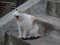 白峯寺の猫, #1993