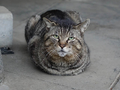 白峯寺の猫, #1994