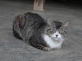 白峯寺の猫, #1995
